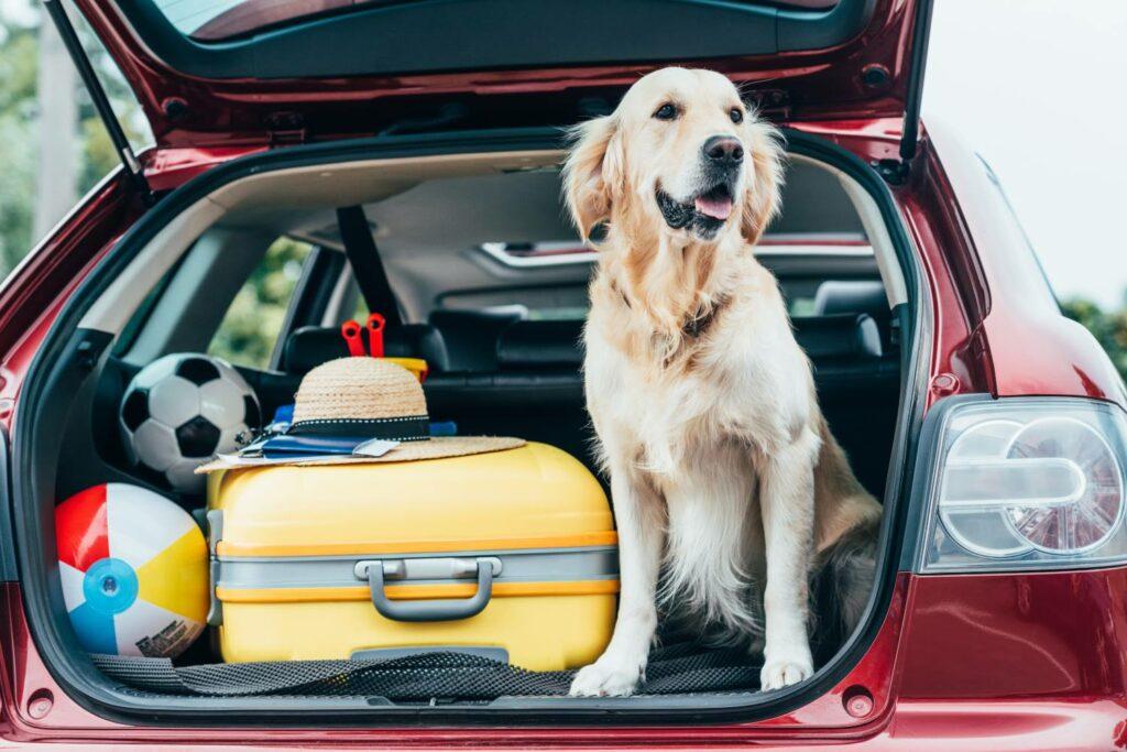 Bild Hotel Wernigerode Urlaub mit Hund